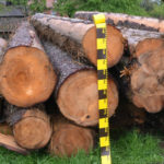 Amenzi usturătoare și lemne confiscate în urma unor razii în zona Brad