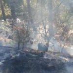 (VIDEO) Incendiul de vegetație uscată  izbucnit joi în Câmpeni, zona Valea Bistrii, a fost lichidat de îndată!