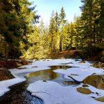 Ghețurile se subțiază și  zăpezile se topesc în Apuseni. Vine primăvara!